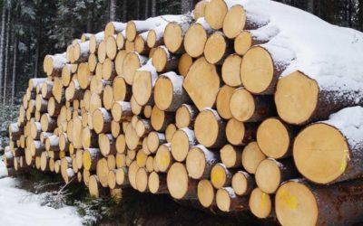 Na Krnovsku a Vrbensku se rozkrádá dřevo, případy řeší policie