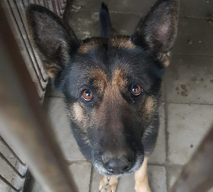 Našel se pes připoutaný kovovým řetězem ke koši, vysvobodili ho až krnovští strážníci
