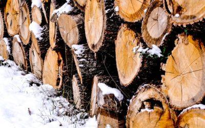 Kradené dřevo měl použít na vytápění, hrozí mu vězení