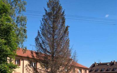 Nedostatek vody v Krnově vede k úhynu stromů