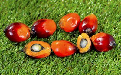 Palmový olej škodí životnímu prostředí i lidskému zdraví