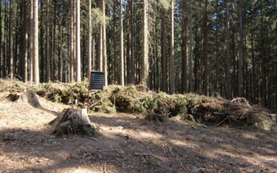 Kůrovcová kalamita poničila cesty, Moravskoslezský kraj požádal vládu o podporu