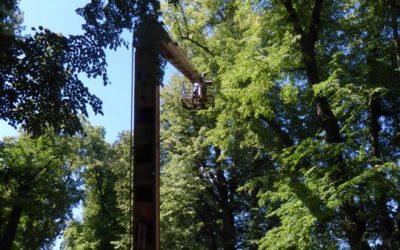 Památné lípy na Uhlířském vrchu prochází každoroční údržbou