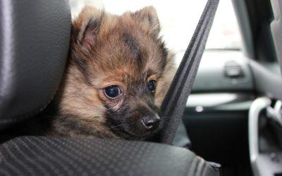 Cestování se zvířaty v členských zemích EU je možné za podmínek stanovených příslušným unijním nařízením