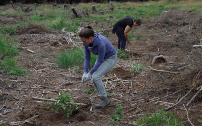 Dobrovolníci zkoušejí novou metodu pro zalesnění kalamitních holin