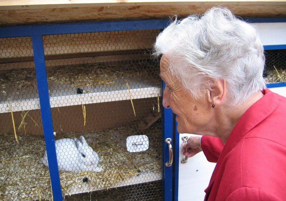Zloděj ukradl z králíkárny pět chovných králíků