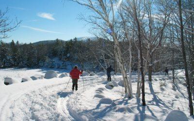 Trasy pro běžkaře se letos změní kvůli kůrovci