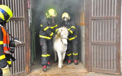 Cvičení hasičů: Zachraňovali koně, v budově se vznítilo uskladněné seno