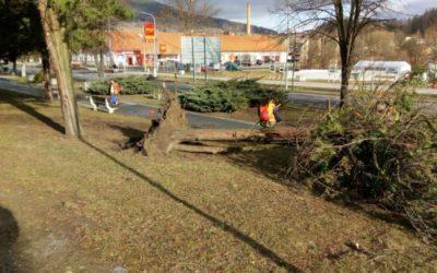 Vichřice ve Vrbně převracela a lámala stromy