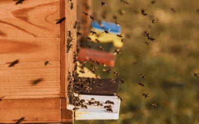 Zloděj na Bruntálsku ukradl čtyři úly včetně včelstev
