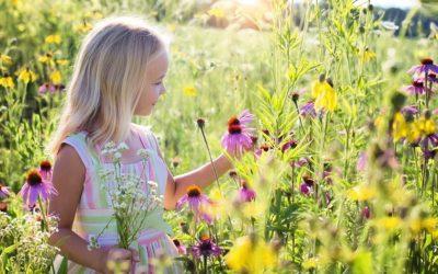 V Bruntále vzniknou další květinové loučky, místa už jsou vybrána