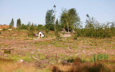 Suchem oslabené stromy napadl kůrovec a zanechává za sebou nenapravitelné škody