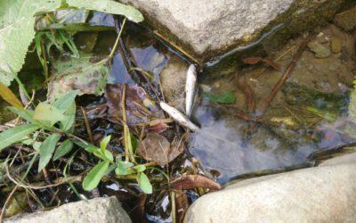 Čtenáři píší: V krnovské řece Opavici vyfotila mrtvé ryby