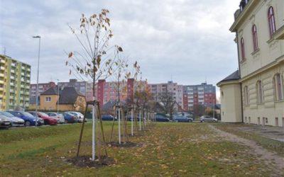 Bruntál bude krásnější o desítky nových stromů