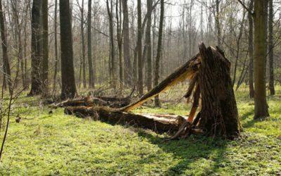V Bruntále platí zákaz vstupu do městských lesů