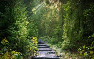 Při procházkách v lese dodržujte několik základních pravidel