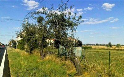 V Moravskoslezském kraji nestačily 2 miliony korun na kácení stromů