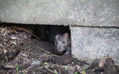 Čelisťové a lepové pasti usmrcují zvířata zvlášť trýznivým způsobem, prodejcům hrozí milionové pokuty