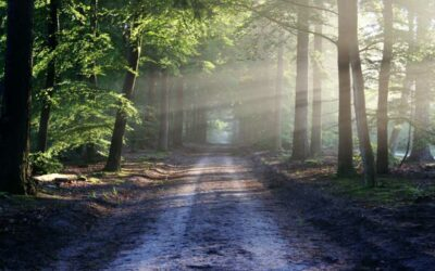Ministerstvo zemědělství podpoří krajinu a zemědělce 1,2 miliardy korun, nejvíce poskytne na lesní cesty a výsadbu stromků na holinách v lesích